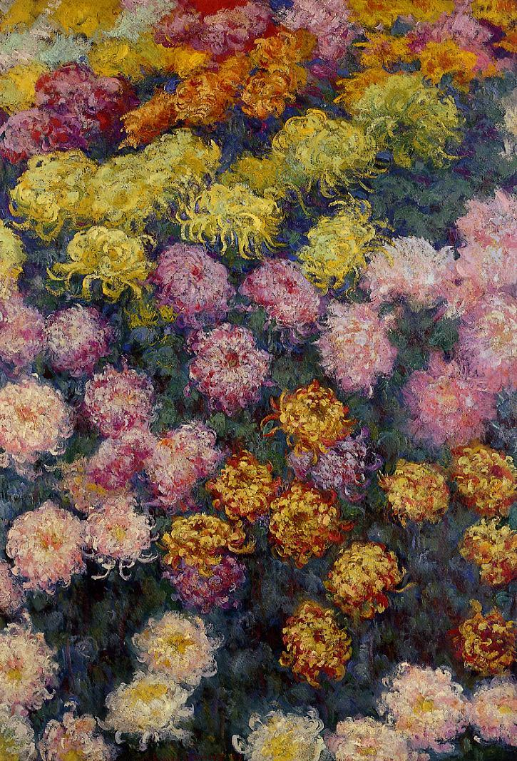 Bed of Chrysanthemums 1897